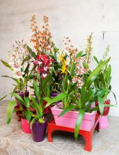 For a more ebullient look with orchids, group them together