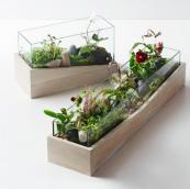 Roar + Rabbit ash wood and glass terrariums, £59 or £79 at West Elm