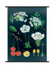 Wallography has a new smaller size of botanical/zoological chart, 60x80cms, at £59. www.wallography.co.uk