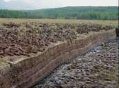 But the horticultural industries' demand for peat leaves peatlands ruined