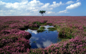 Peatbogs should look like this. B&Q aims to cease using peat altogether by 2030