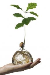 Award winning acorn vase by Ilex Studio, £23, www.ilexstudio.com