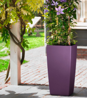 Planters come in a variety of colours and sizes. Prices from £24