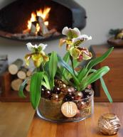Orchids make a fabulous gift - and ask friends and family to give you ones for Christmas and birthdays