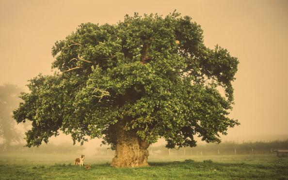 This tree in central Wales was photographed by Tracey Williams