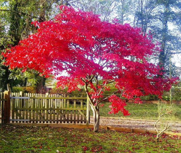 Don 39 t wait for national tree week to plant a tree deco for Ideal trees for small gardens