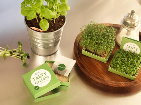 sprout tasty garden kits are cute and useful