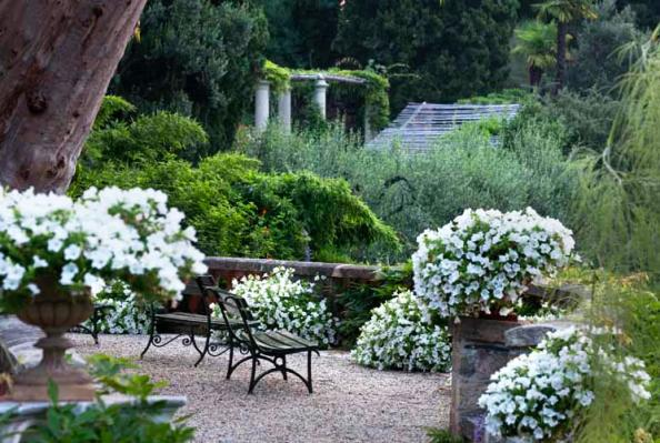 White Flowers Proliferate In This Terrace Area