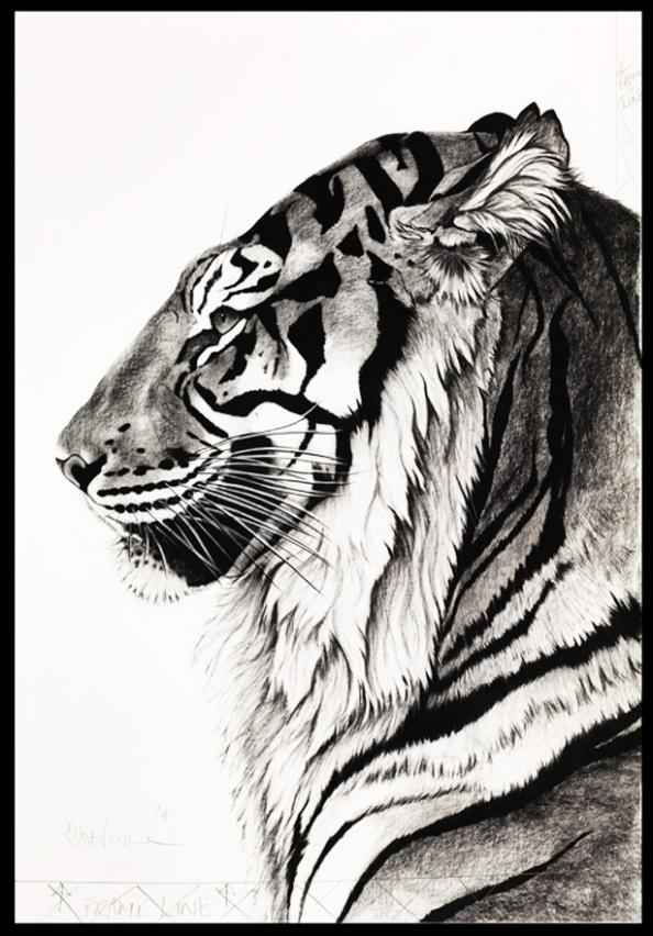 Wildlife Artist Rose Corcoran Raises Money To Protect Indian