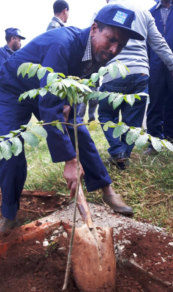 WeForest and Brabantia have worked together to plant trees in Ethiopia