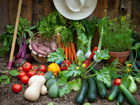 You can grow fruit and veg in containers at home