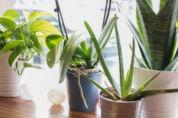 plants indoors are a boon for air quality