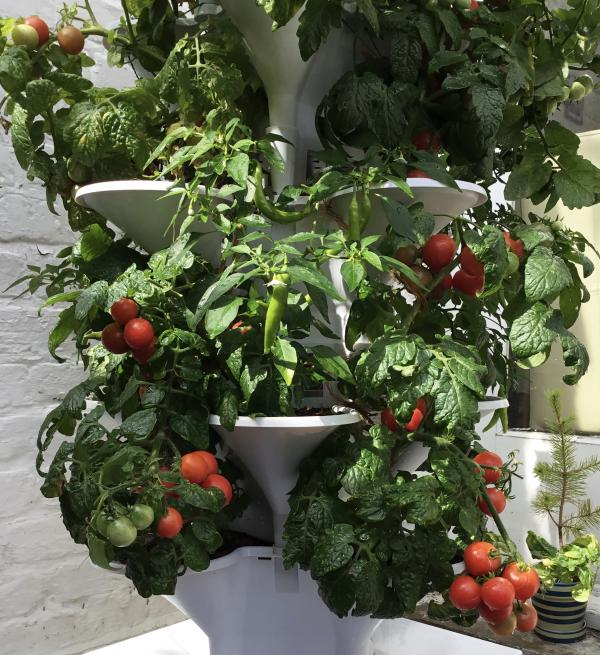 Acqua Tower allows for vertical growing of veg and some fruits