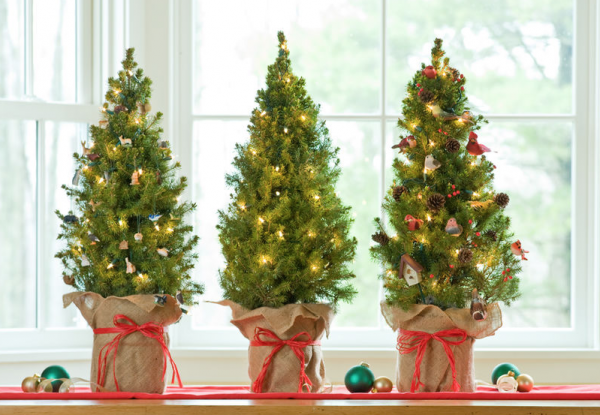 A potted tree is small and manoeuvrable and you can use it again next year
